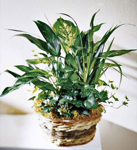 Exotic Assortment Plant Basket